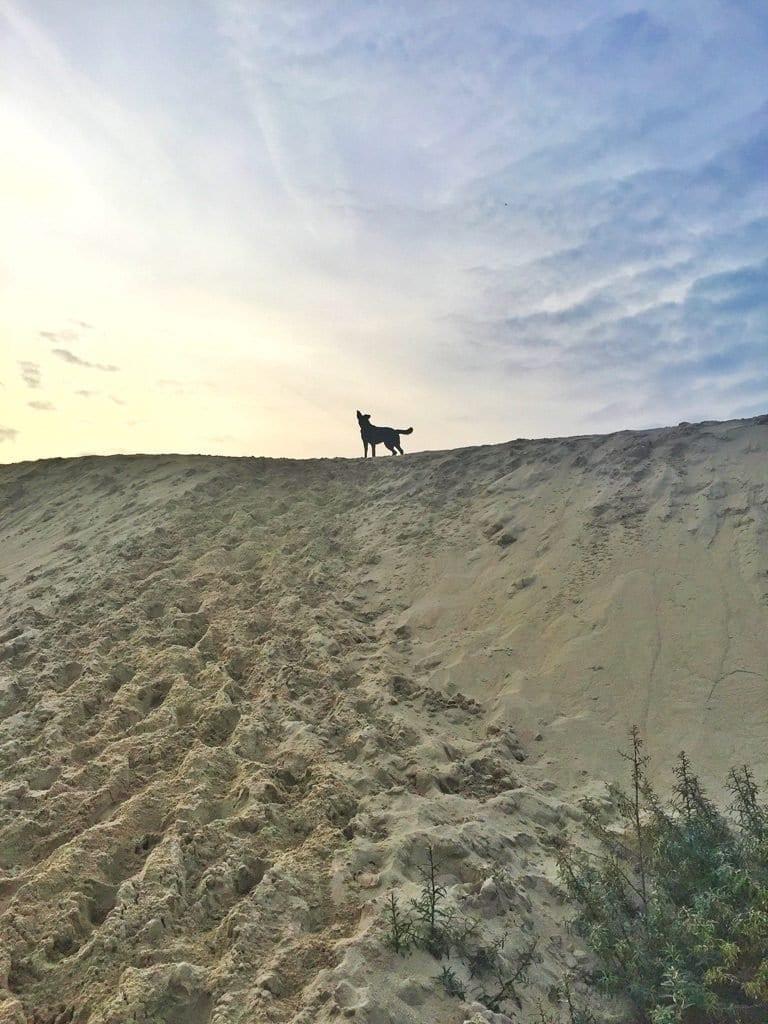 mooie strandwandeling duinenrij