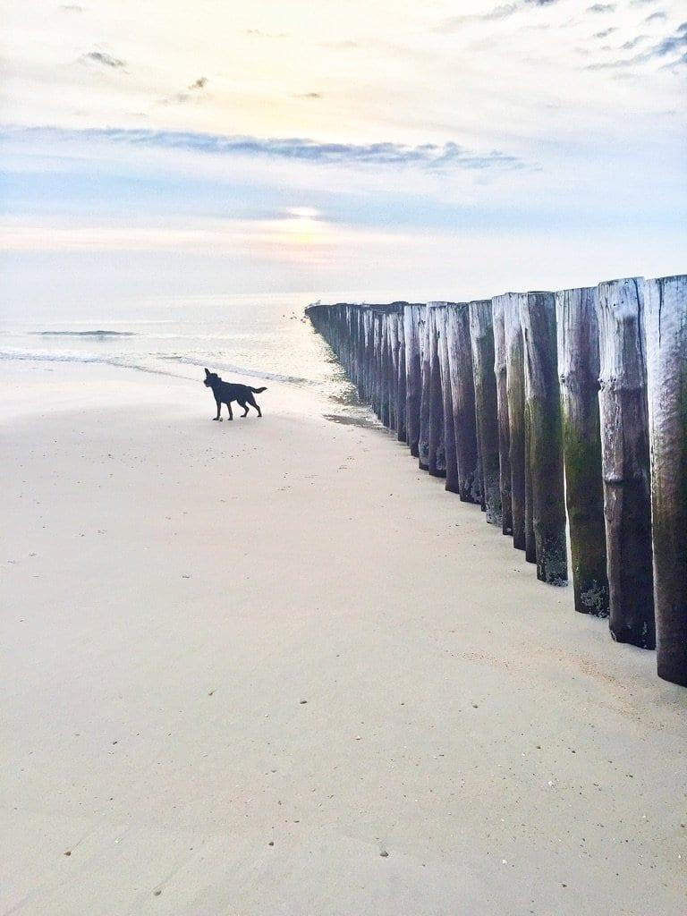 mooie strandwandeling hond