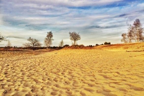 loonse en drunense duinen-The Hike-2