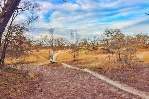 loonse en drunense duinen-The Hike-4