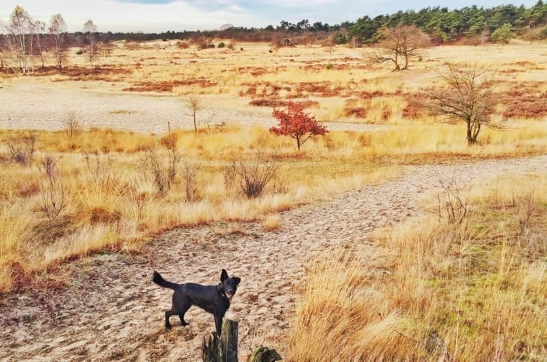 loonse en drunense duinen-The Hike-7
