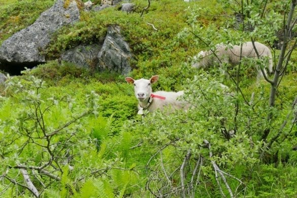 Lyngen Alps-Noord Lapland-The Hike
