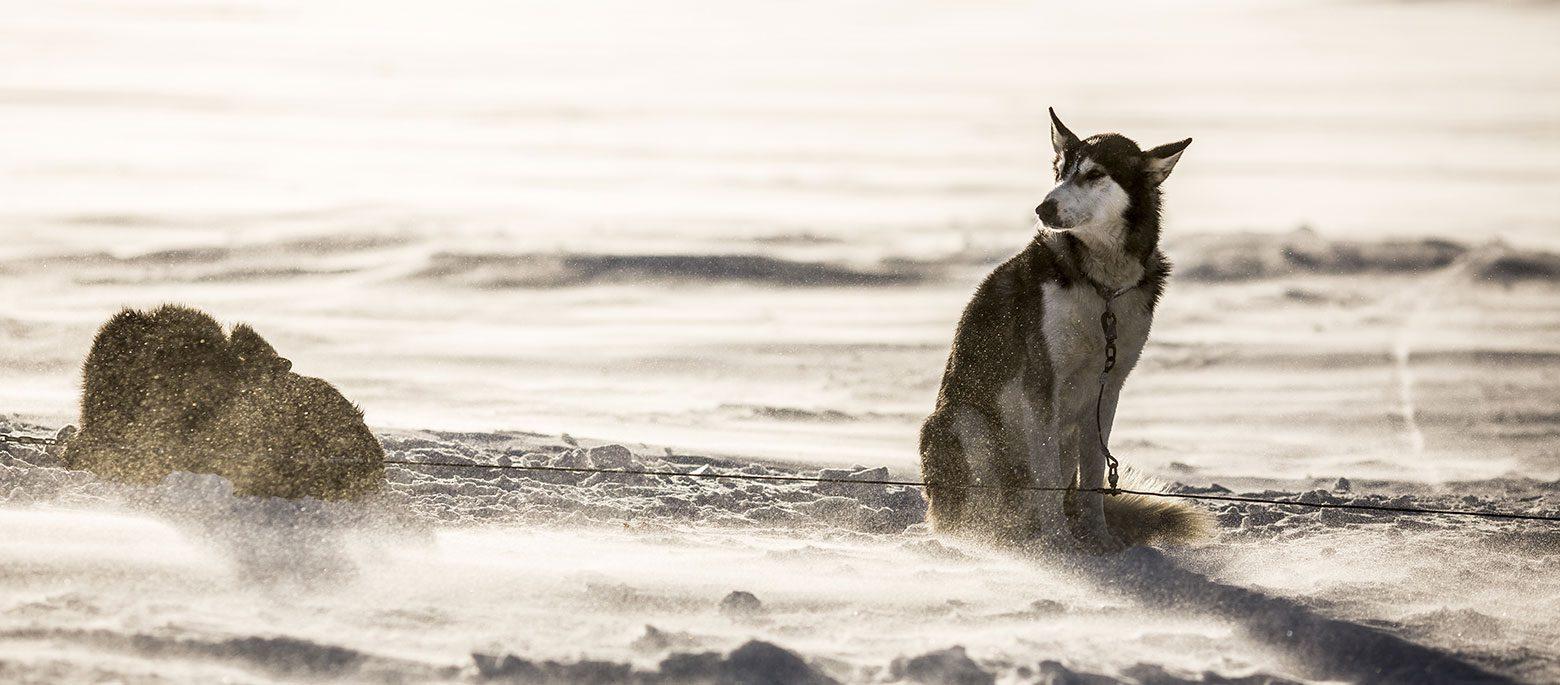 Fjällräven Polar 2