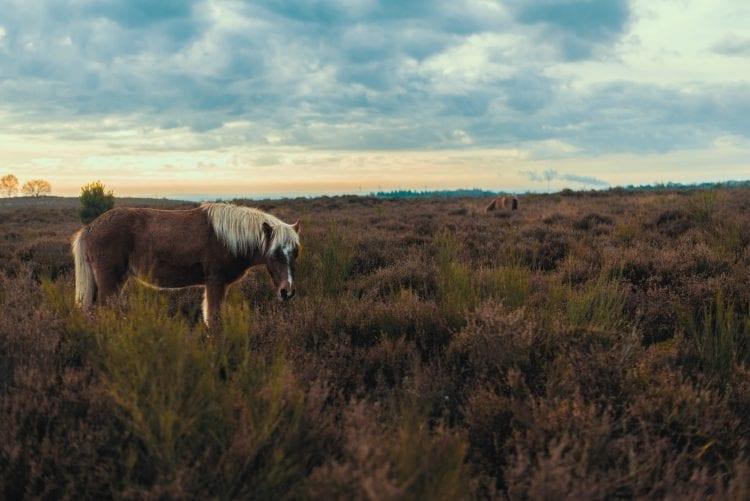 Nationale Parken-The Hke-Credits sander-weeteling