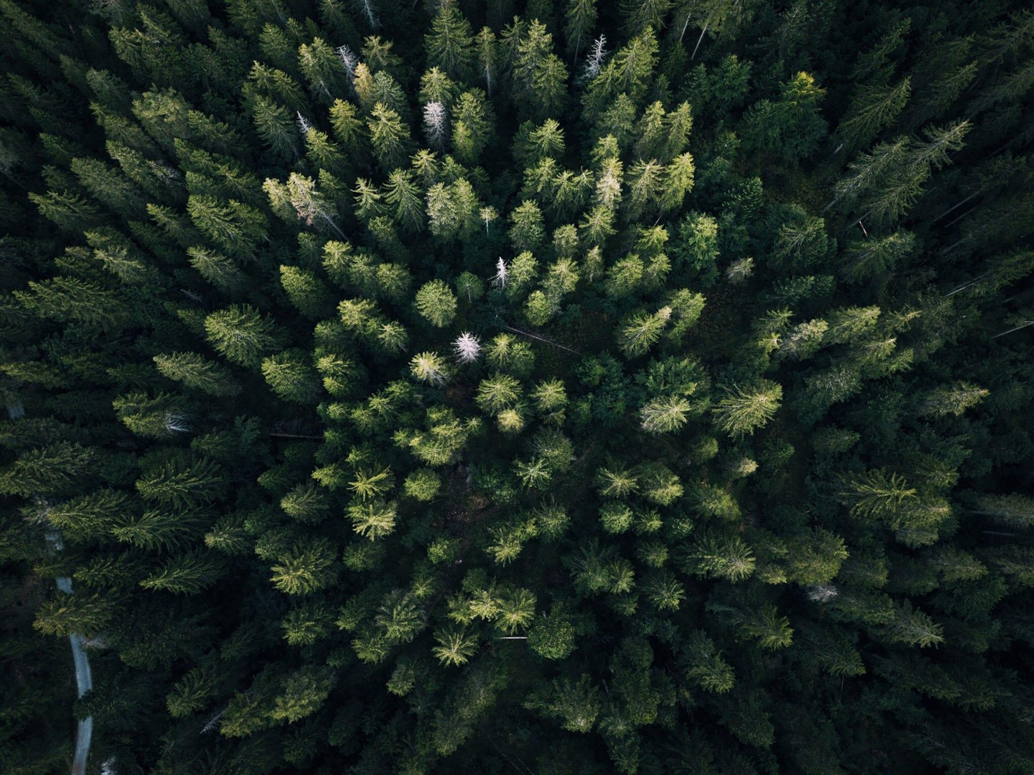 fotograferen met een drone bomen