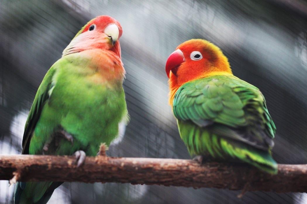 Erawan National Park vogels