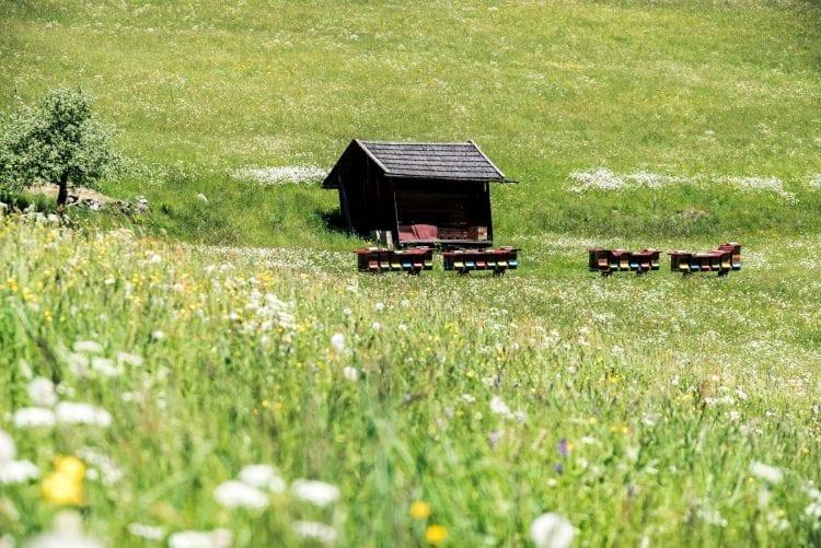 Innsbruck Trek bijen