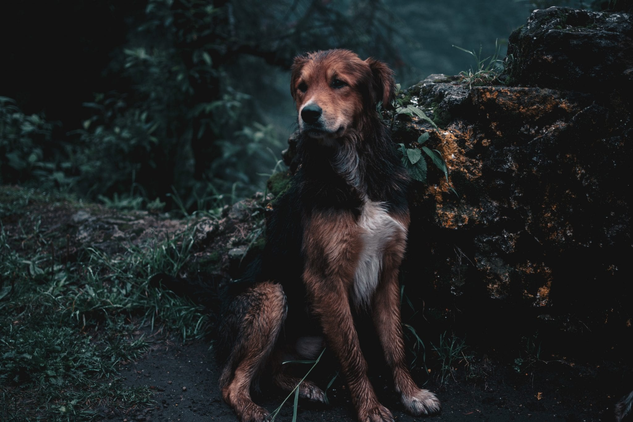 bergwandelen met de hond