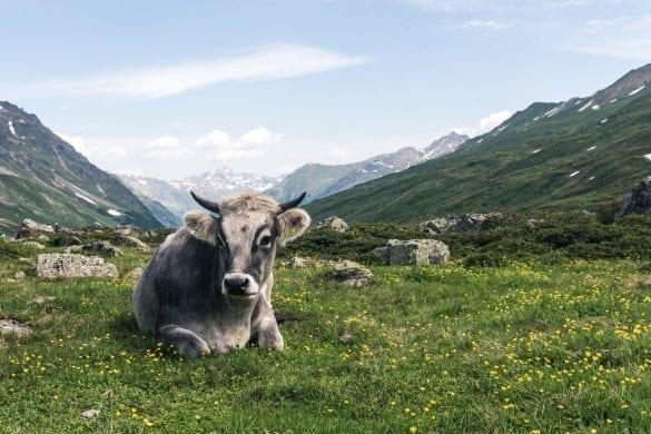 Goed eten in Oostenrijk
