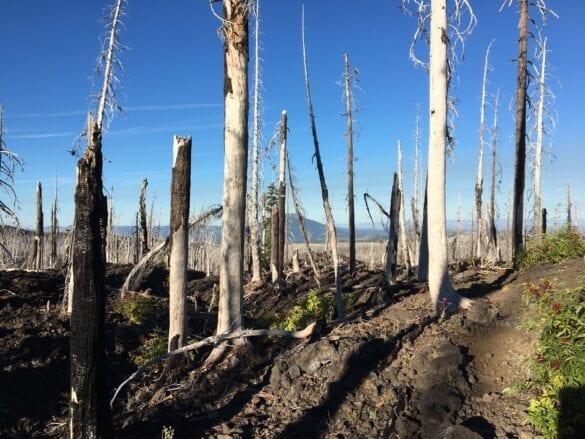 Three Sisters Wilderness bomen