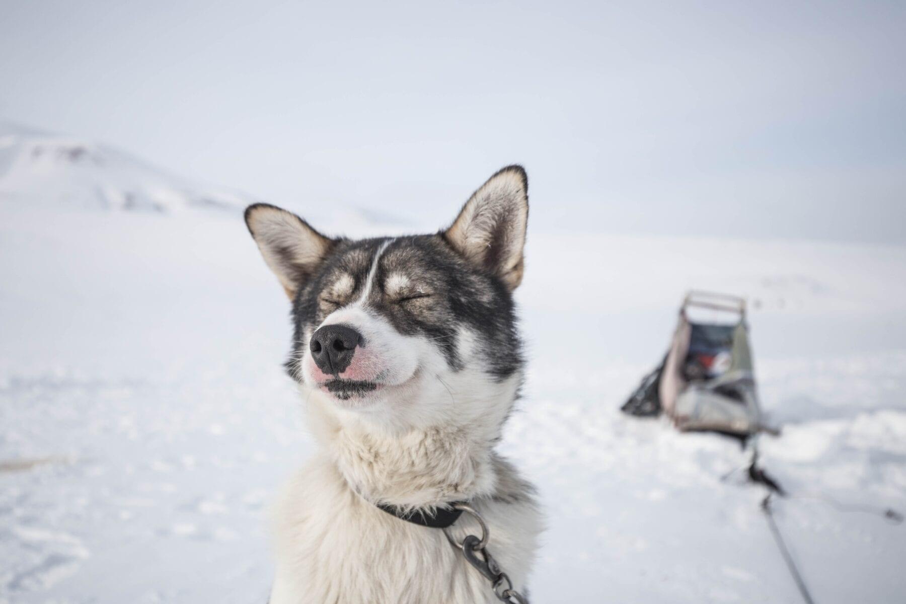tofste wintersportactiviteiten husky