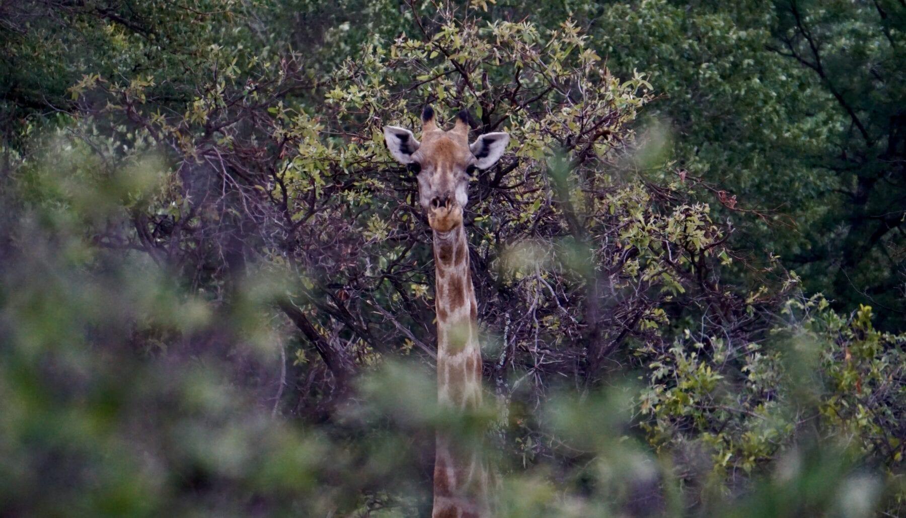 rondreis Zuidelijk Afrika 4x4