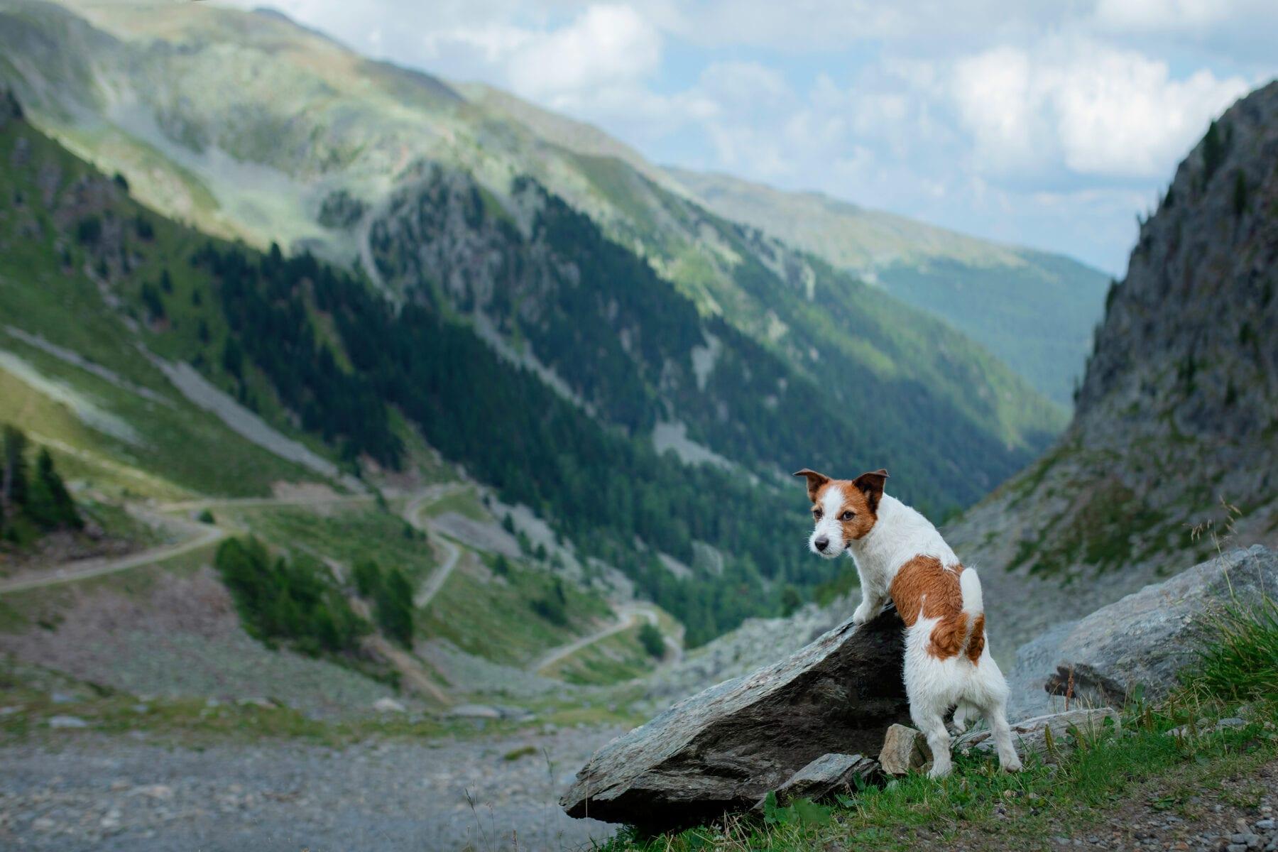wandelen met de hond bergen