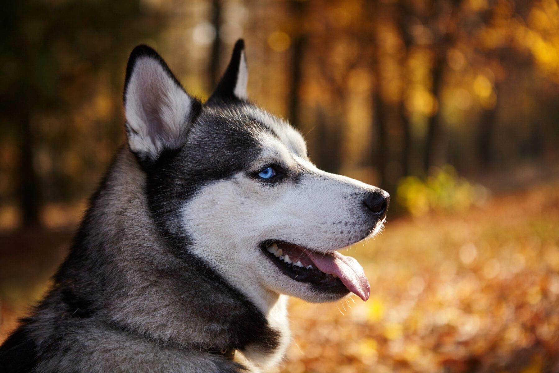 wandelen met de hond bos