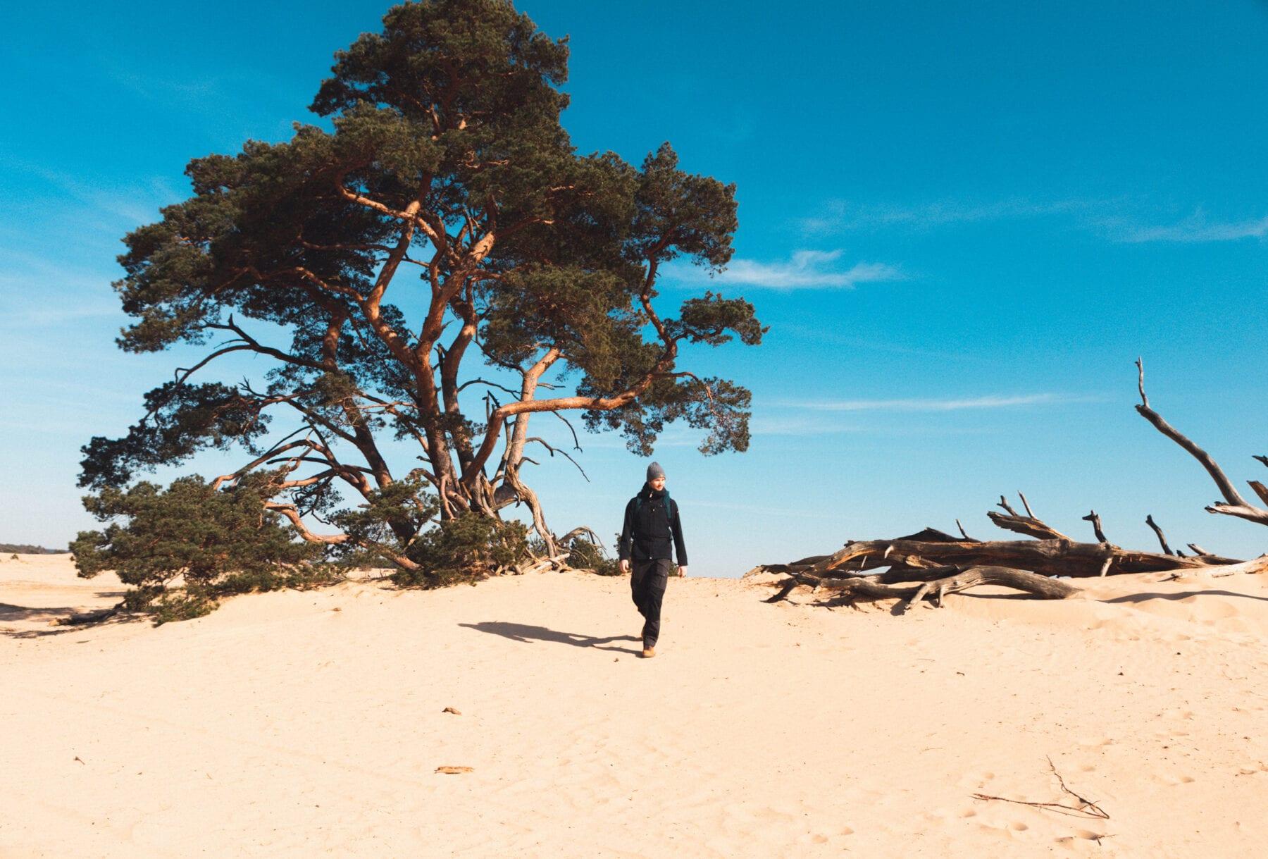 Het Nationale Park De Hoge Veluwe zand