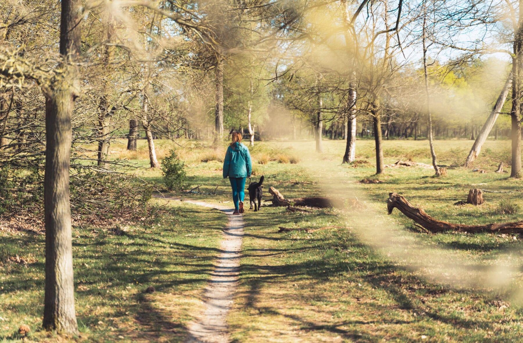 Wandelen met de hond in de Maashorst
