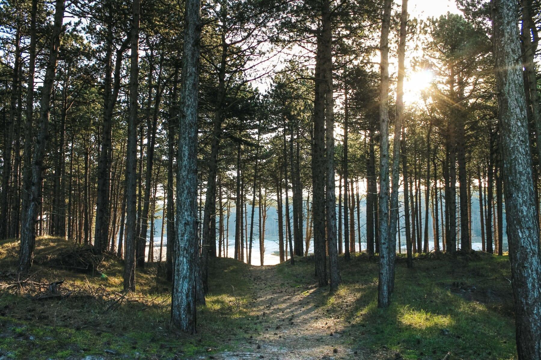 Zeeuwse kust zon door bomen