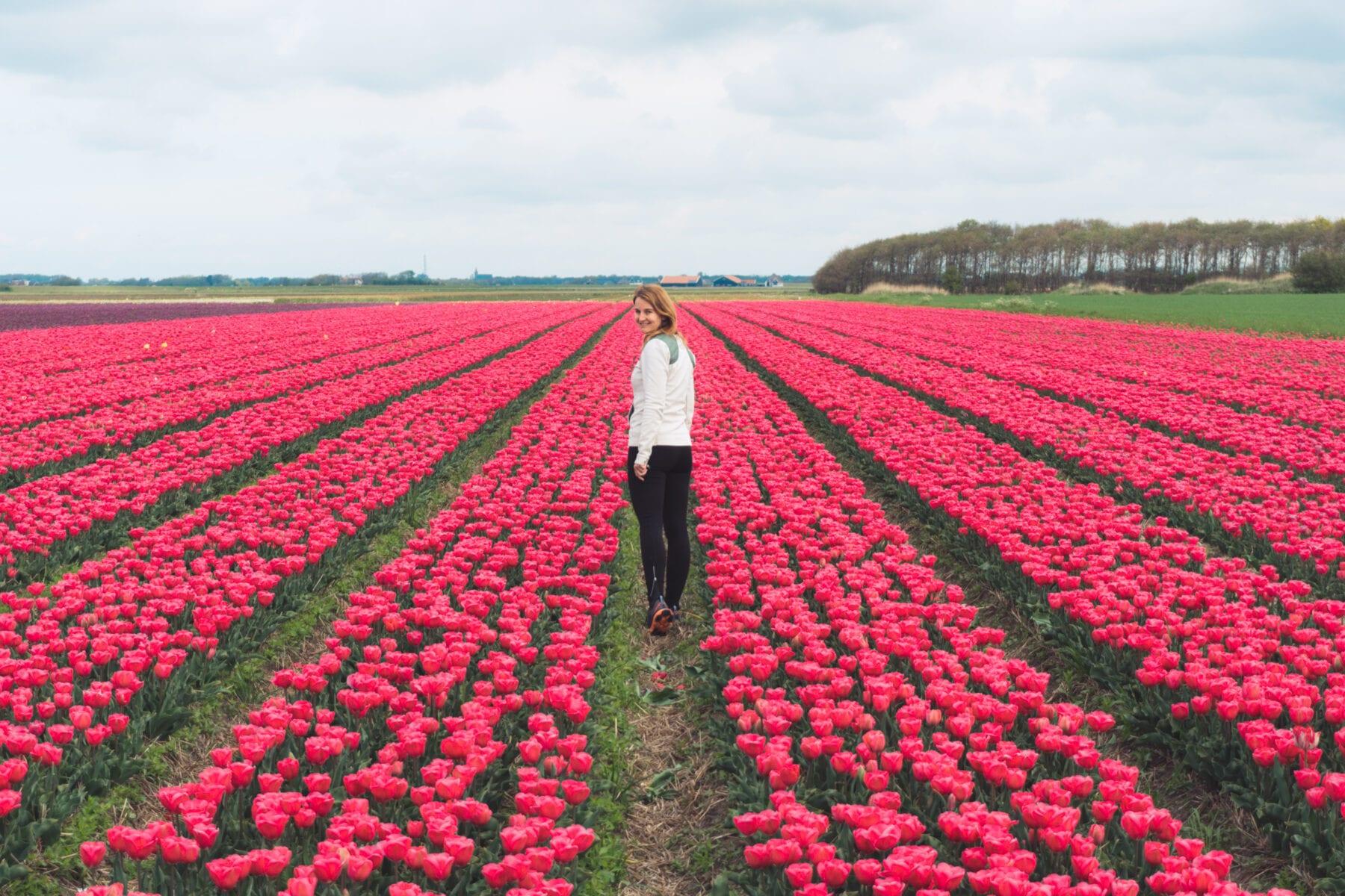 Vakantie naar Texel tulpen