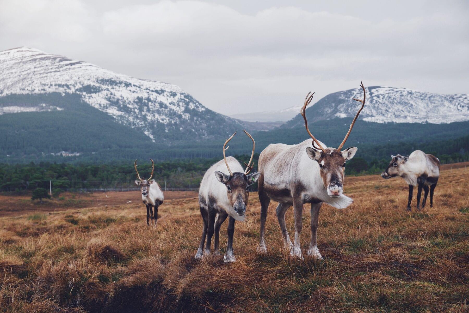 10 mooiste Engelse Nationale Parken Cairngorms