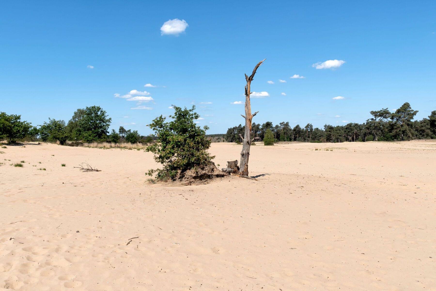Veluwezoom Jeroen van Rooijen nationaal park