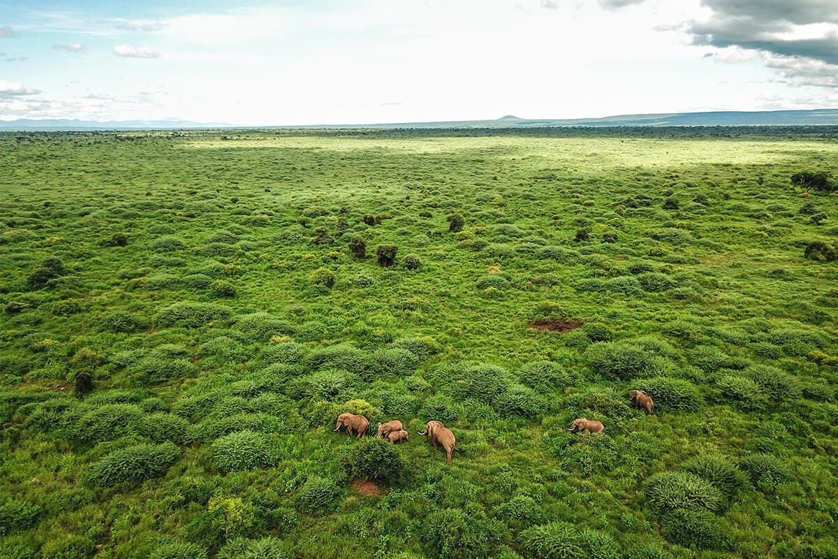 Kenia National Park