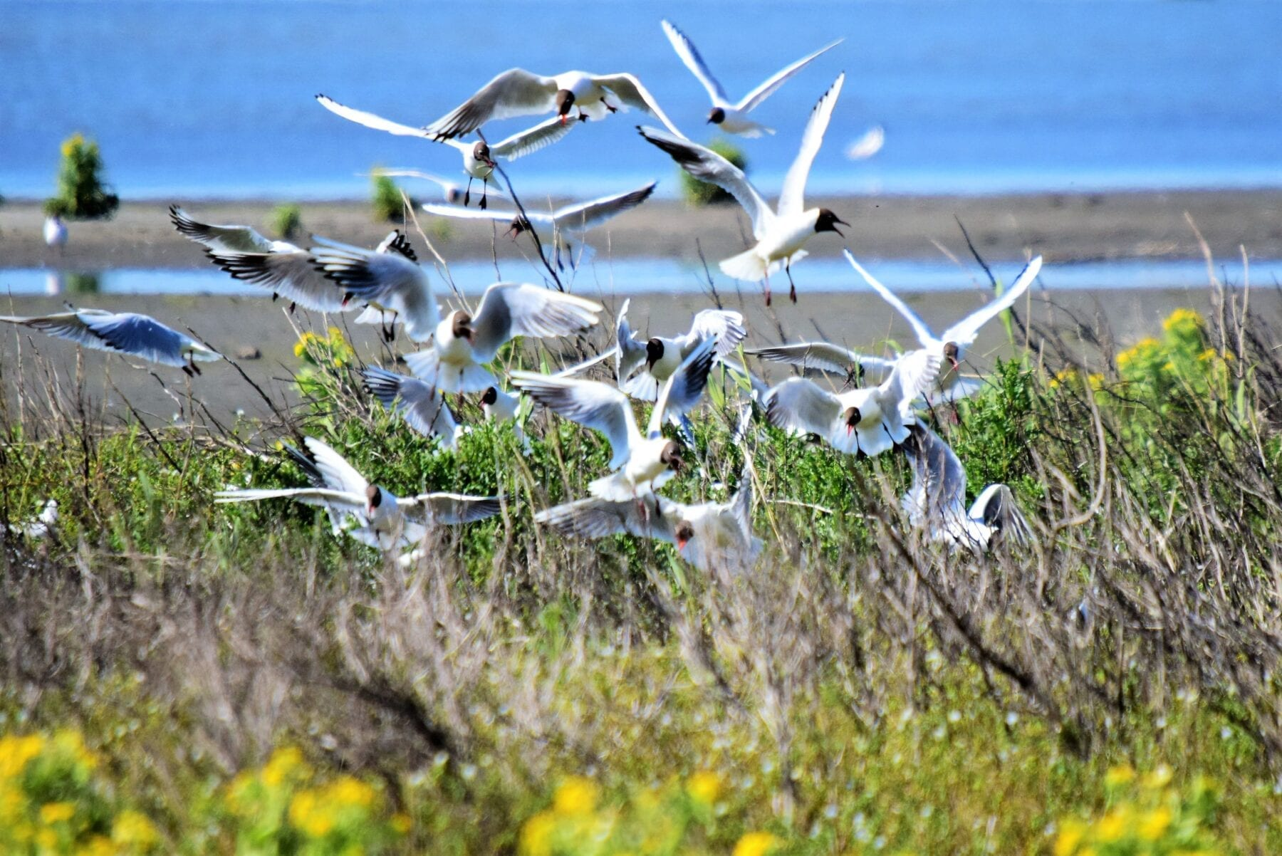 Geniet met en voor de natuur in Nationaal Park Nieuw Land