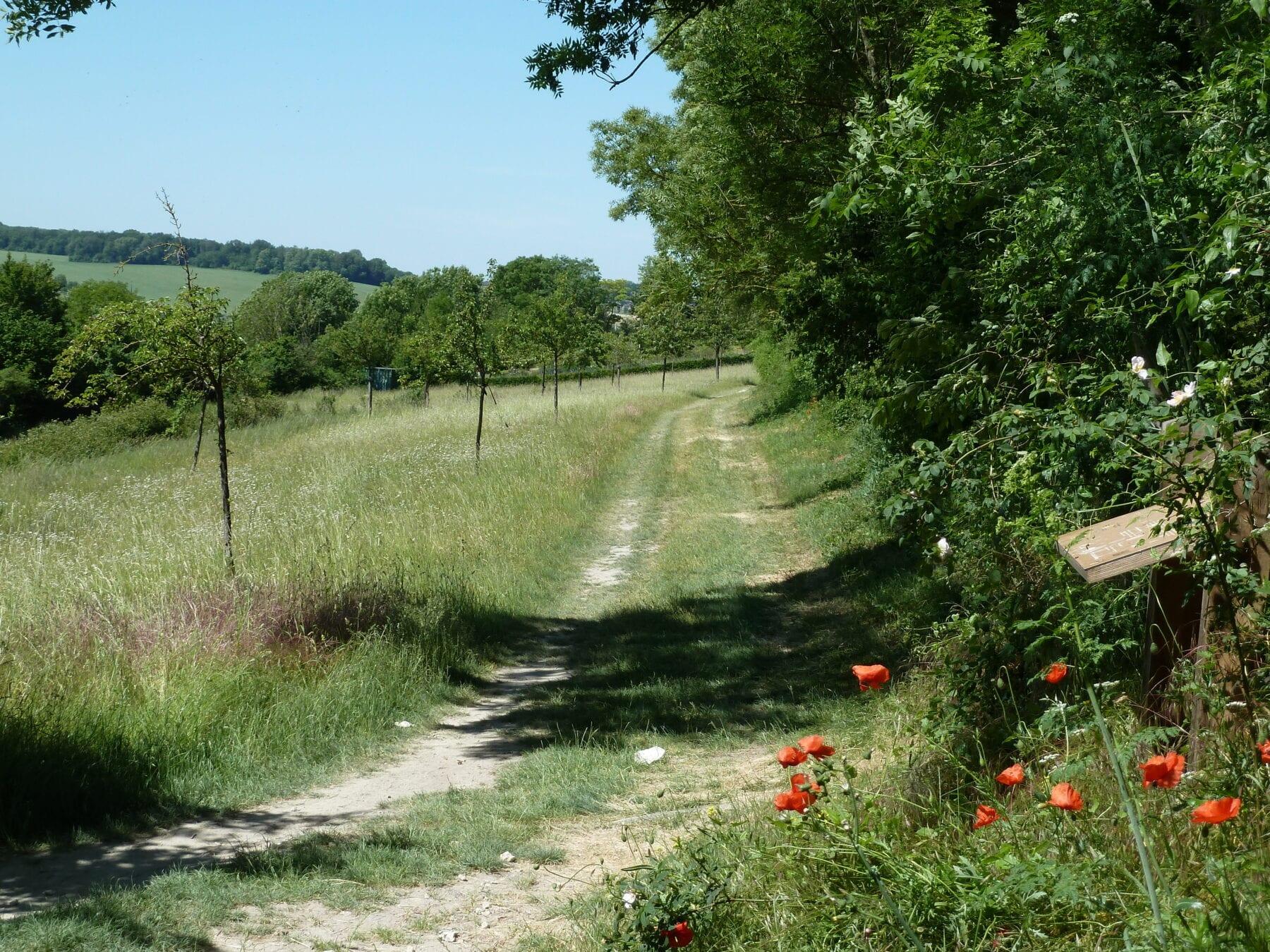 Route des vins Zuid-Limburg heuvels