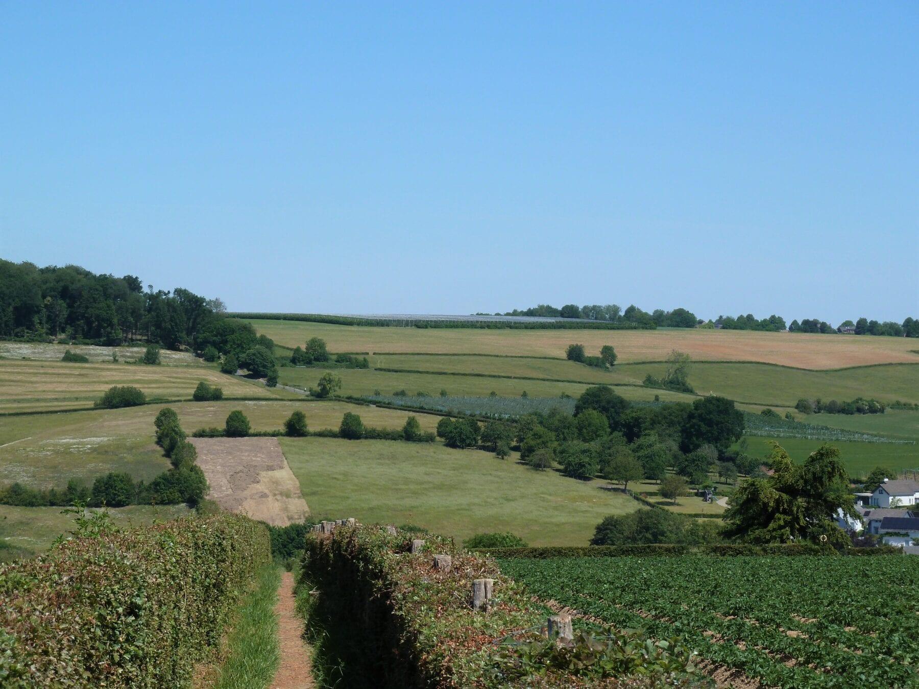 Route des vins Zuid-Limburg de paden op