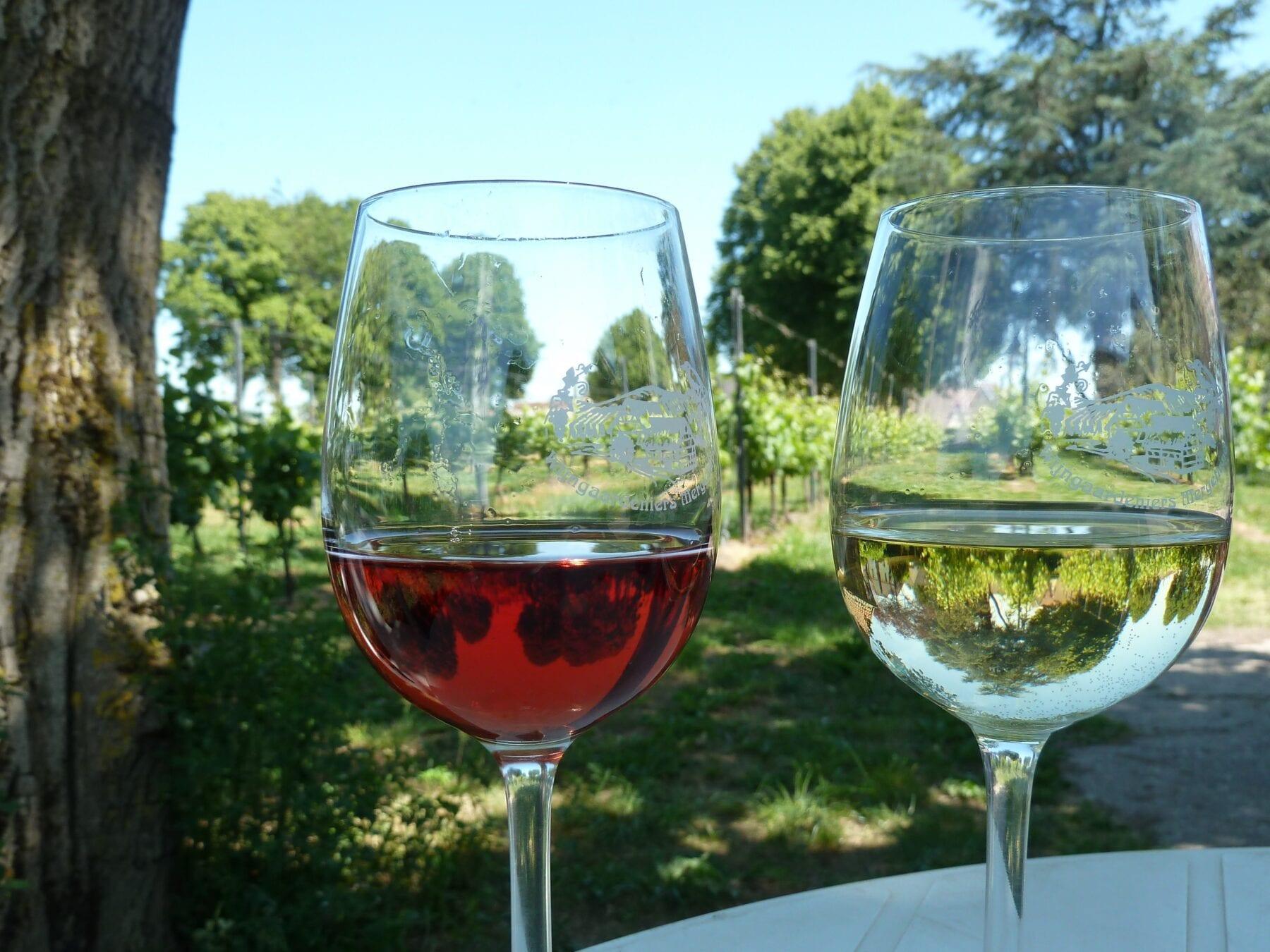 Nederlandse wijn op de Route des vins Zuid-Limburg