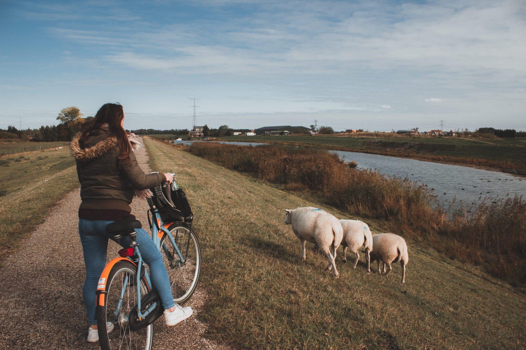 Biesbosch fietsen