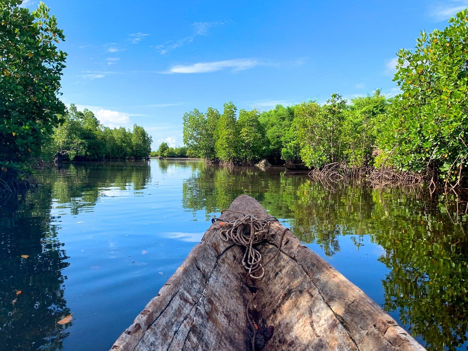 CO2 compenseren mangroves
