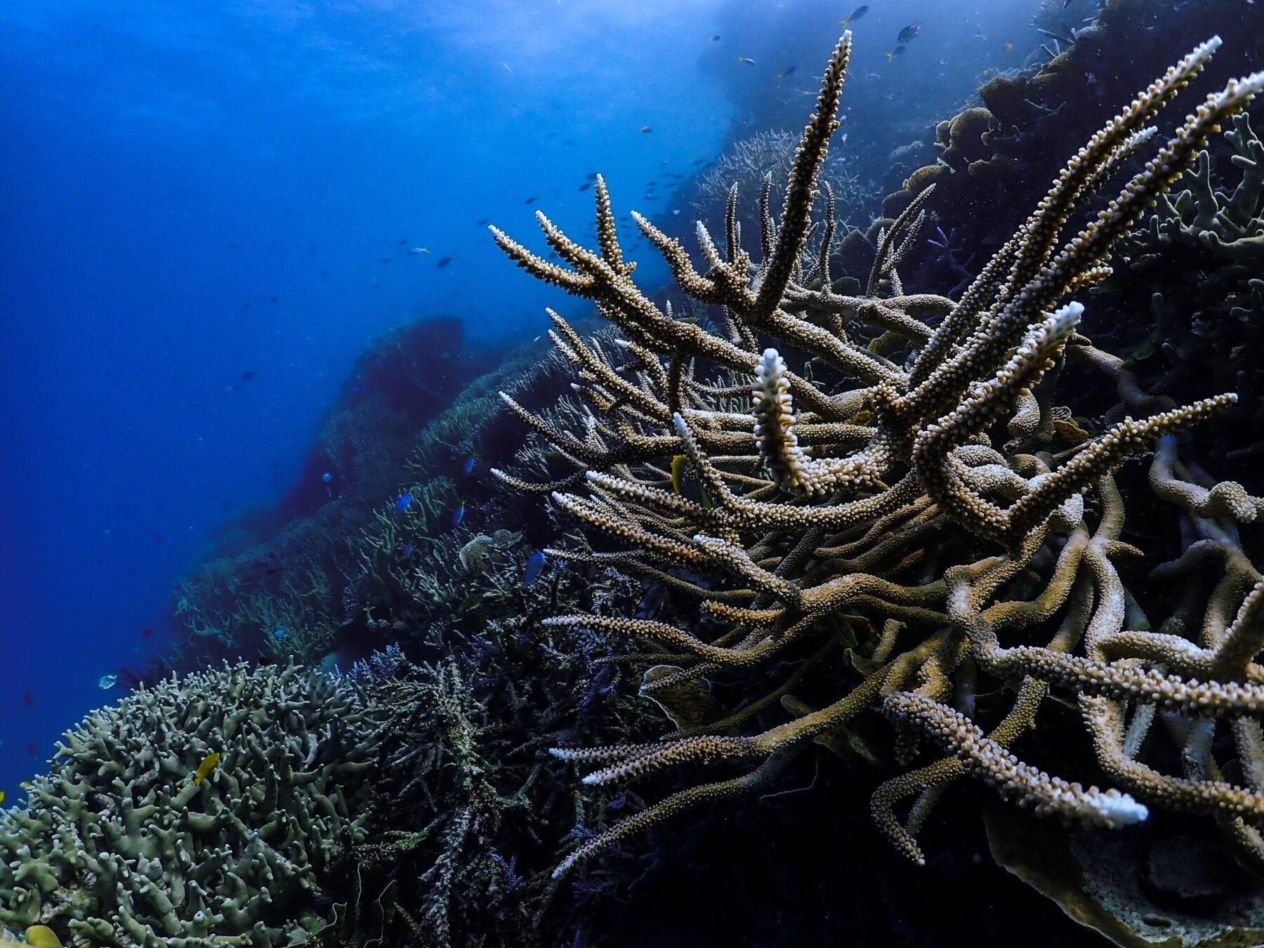 Het Groot Barrièrerif koraalrif