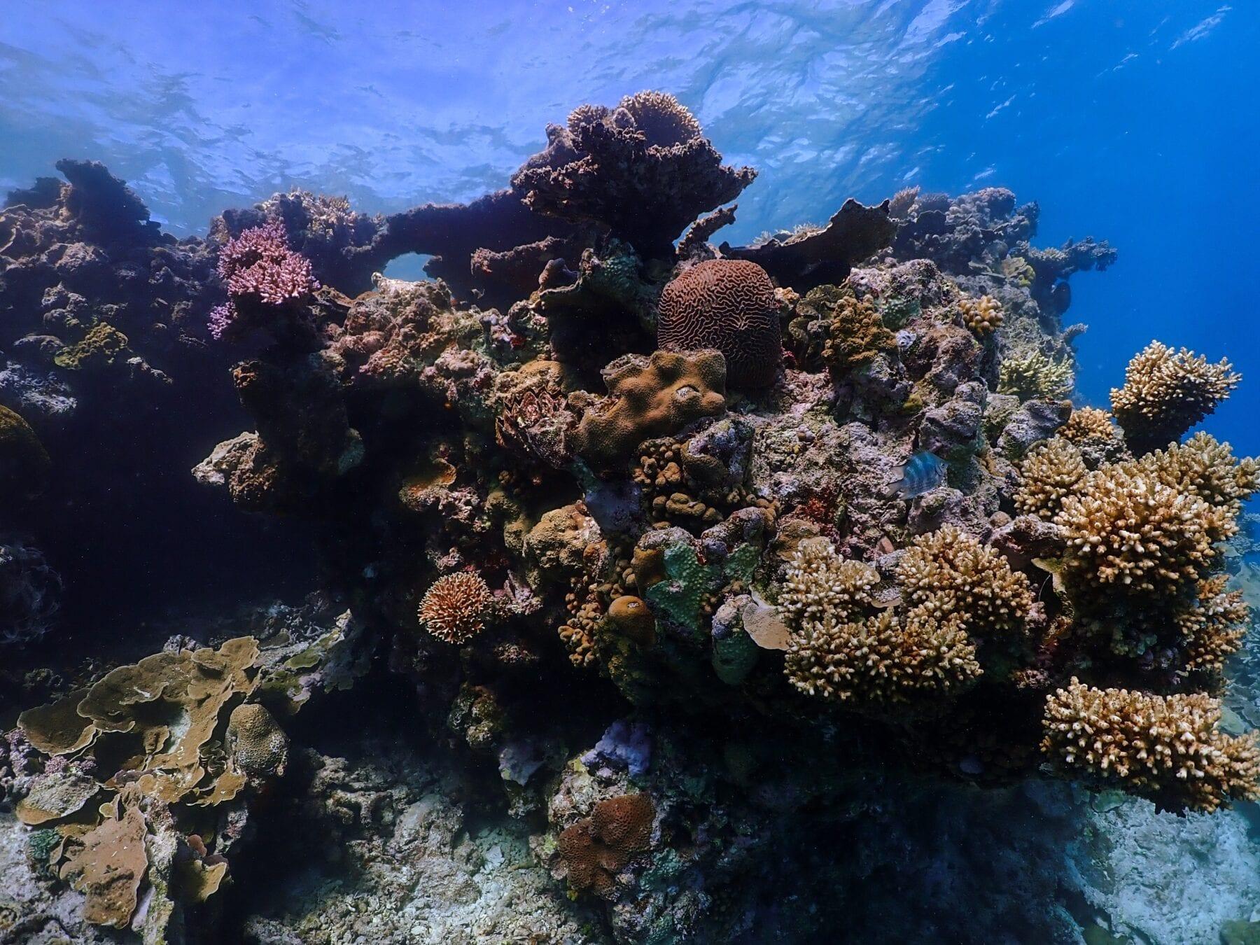 Het Groot Barrièrerif koraalriffen