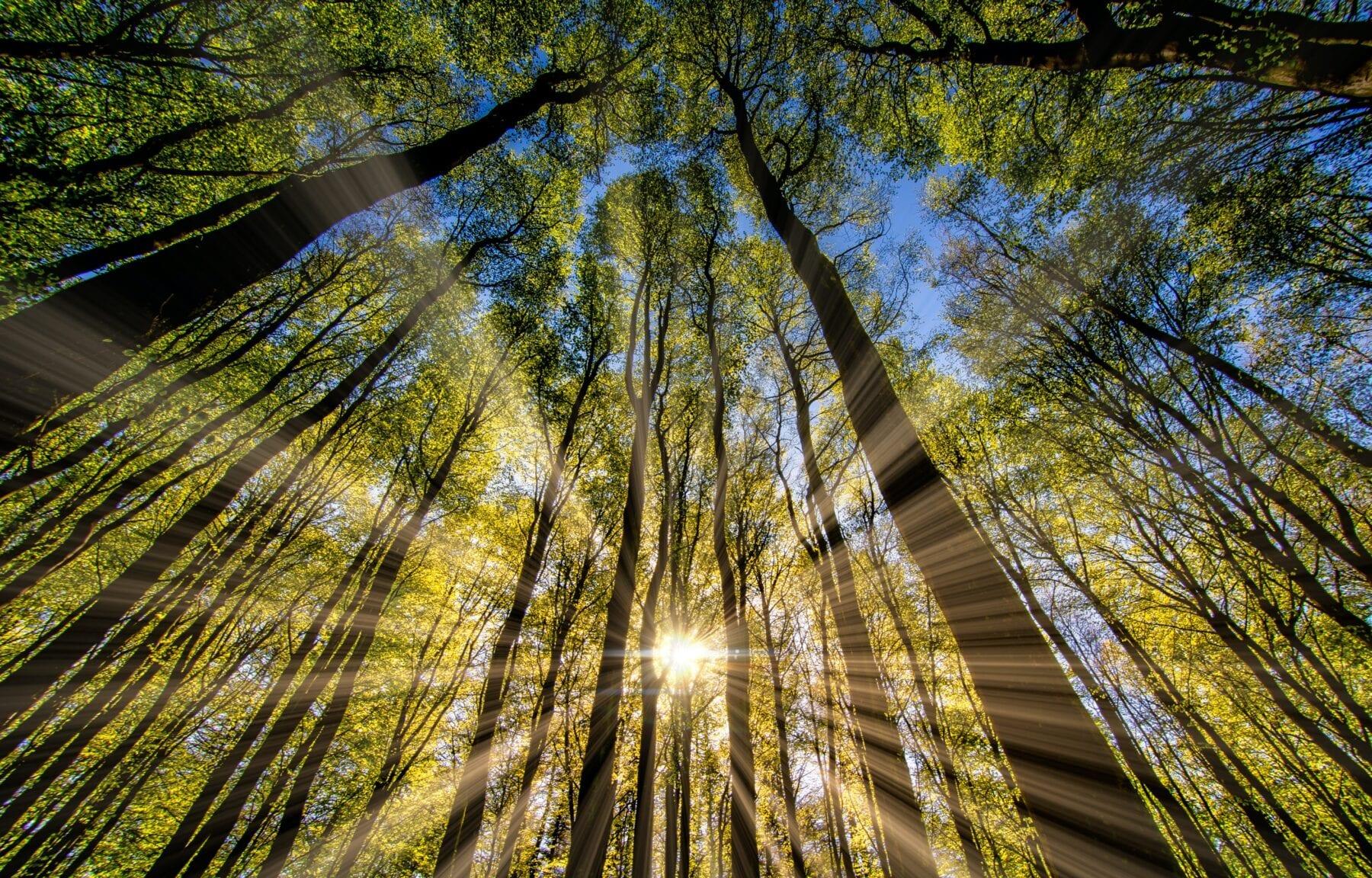 smartphone fotografie licht