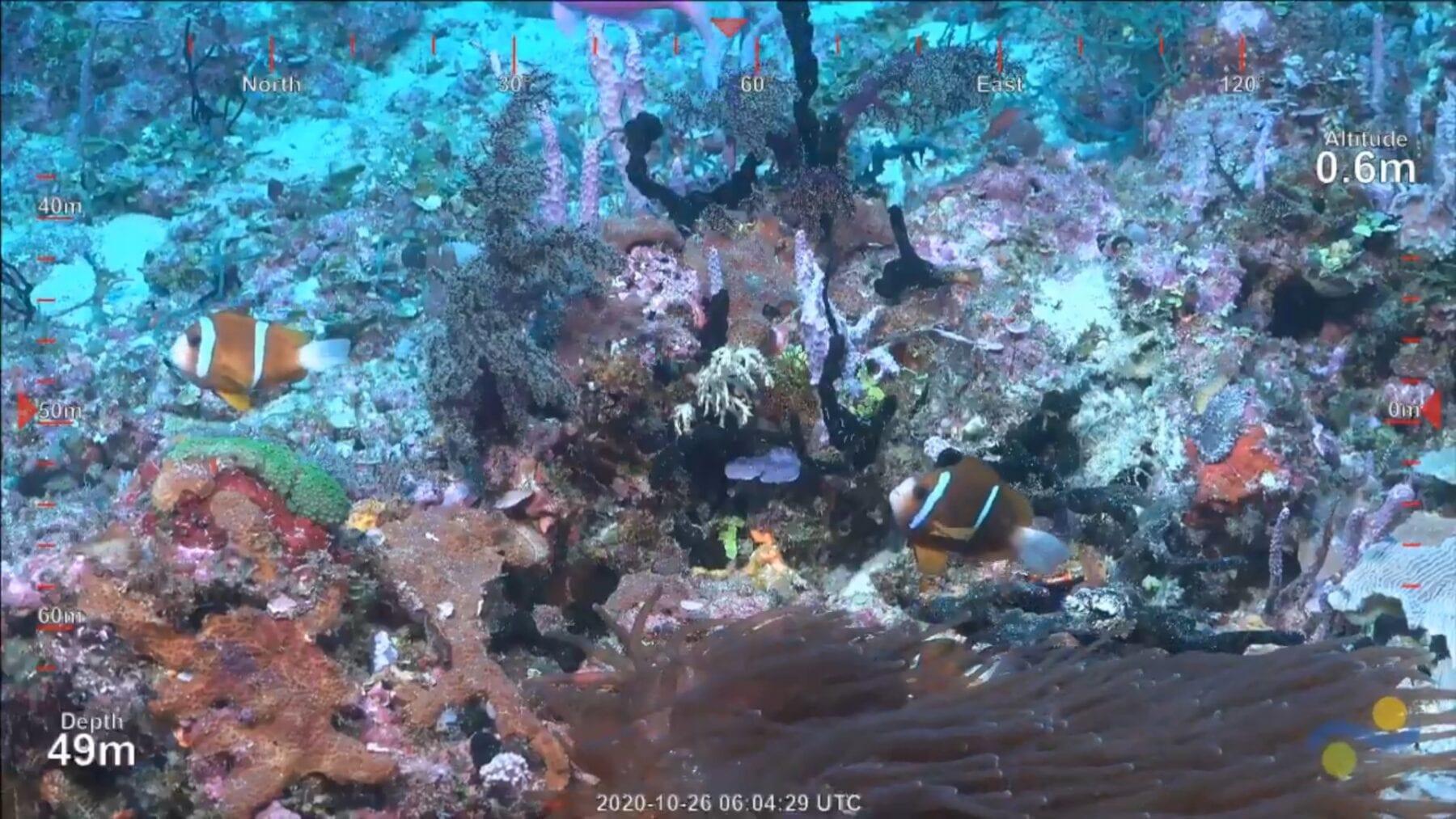 Nieuw koraalrif