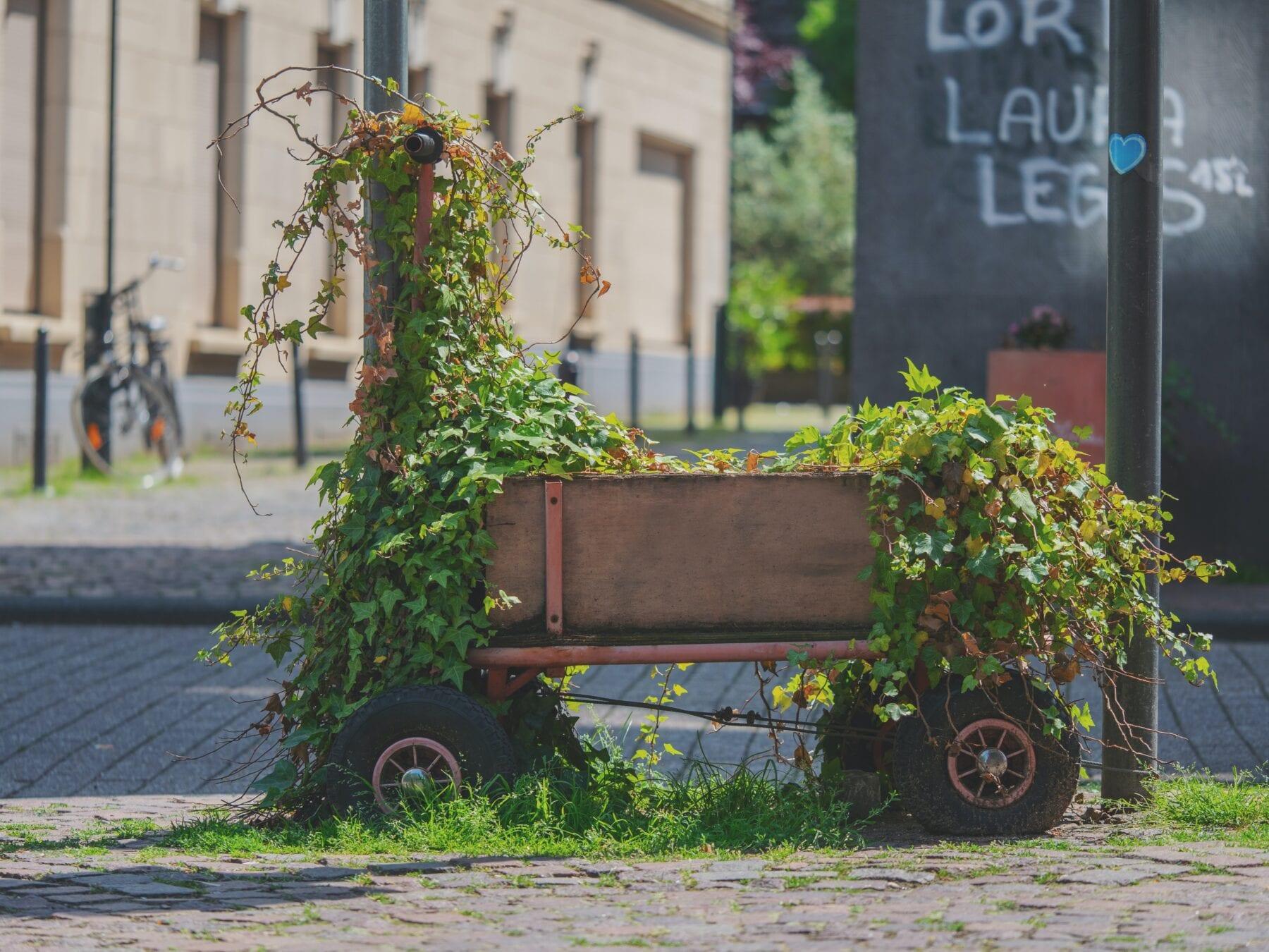 Bolderwagen / Handcart begroeid met klimop