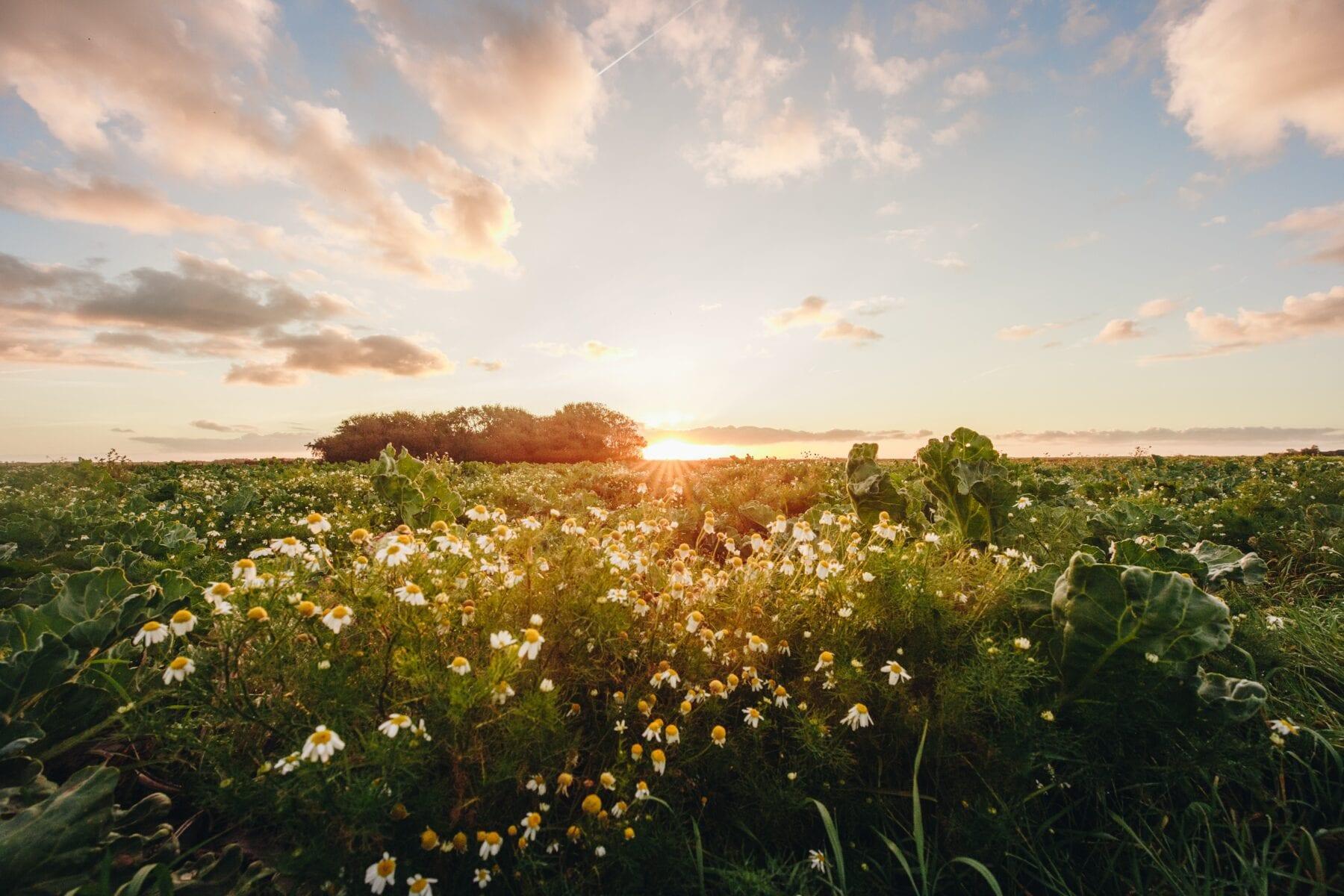 Het waddengebied bloemen