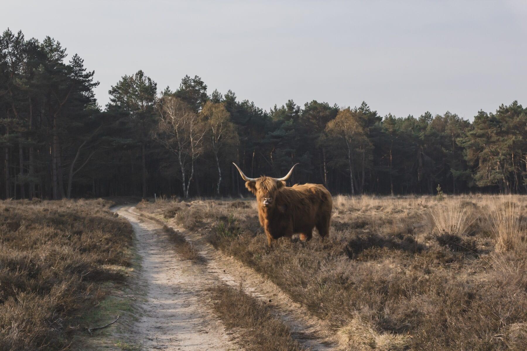 LAW Nederland Het Marskramerpad natuur os