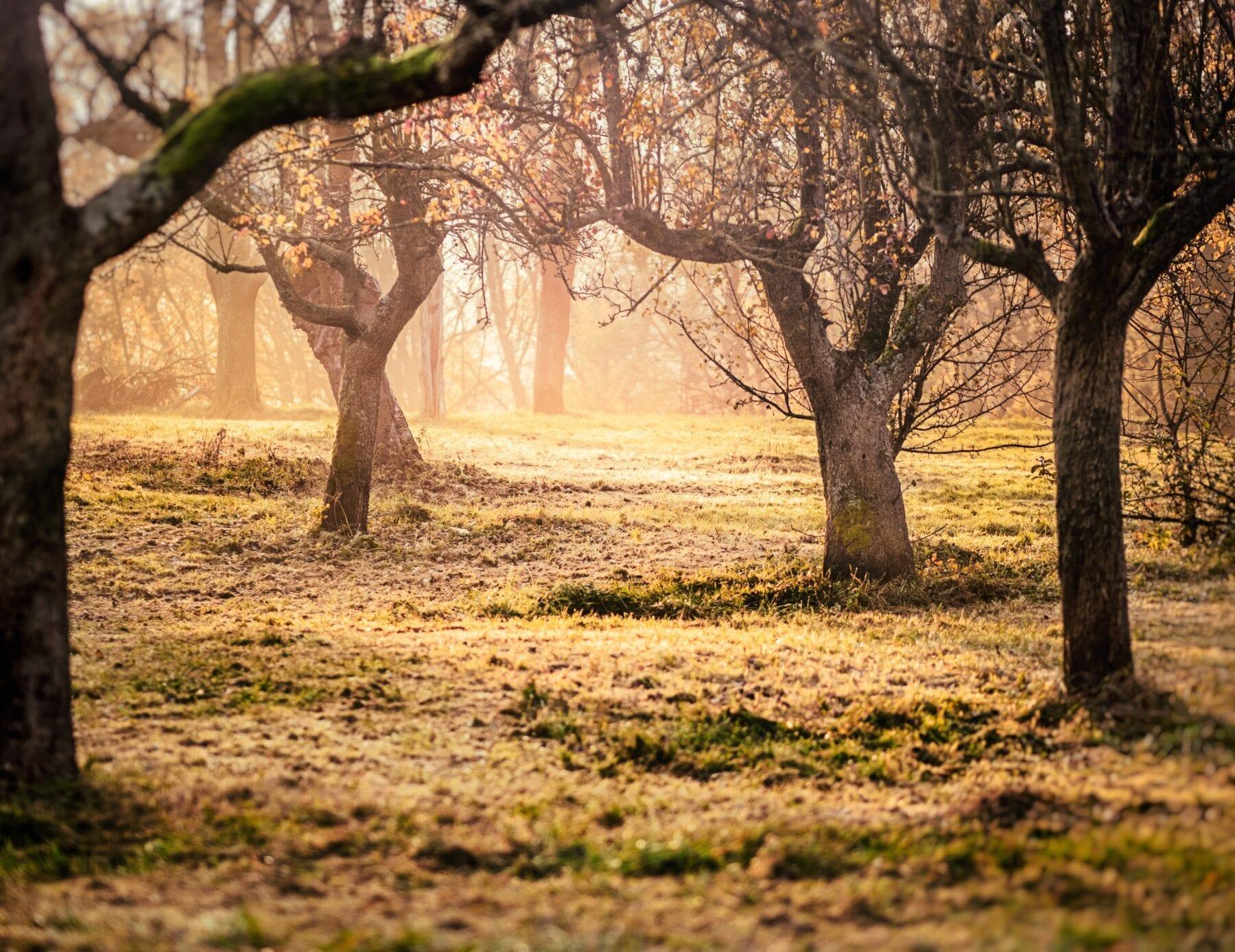 waarom wandelen goed voor je is natuur en bomen