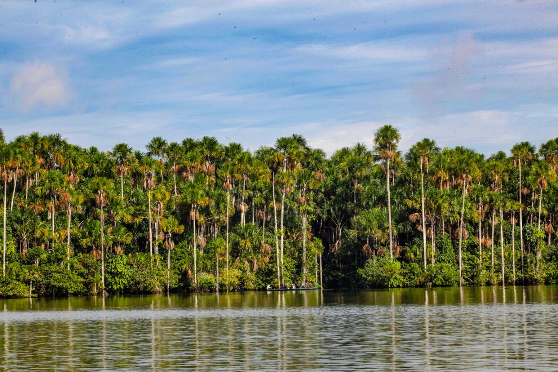 Amazone Peru Tambopata