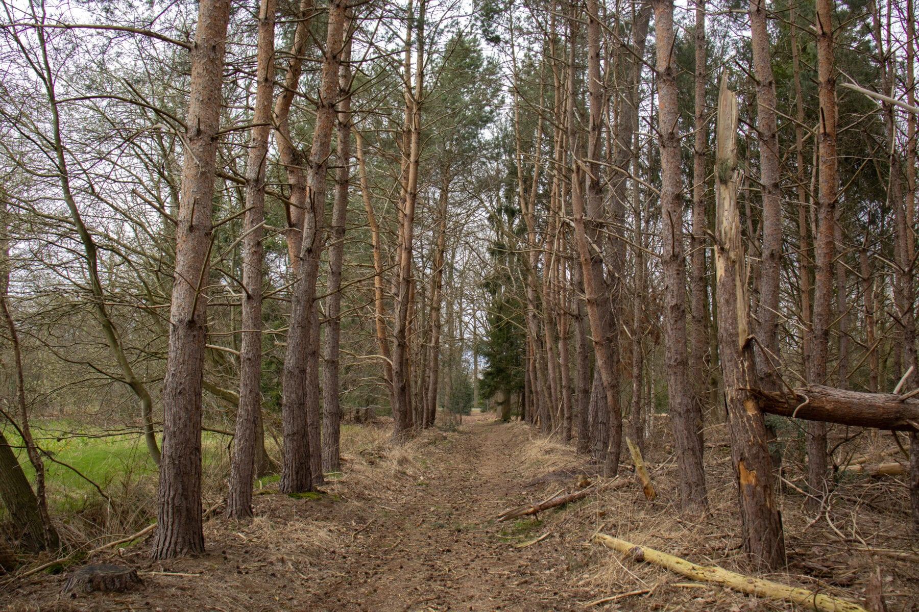 Landgoed Baest bos