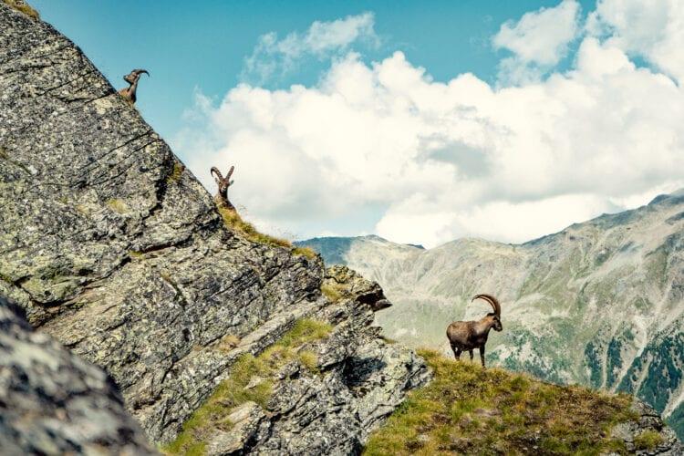 Wallis-Zwitserland