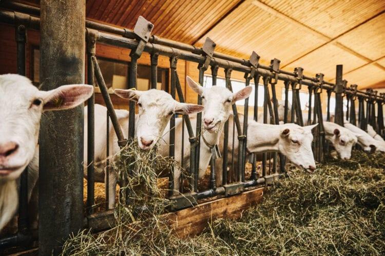 Agriturismo Ticino