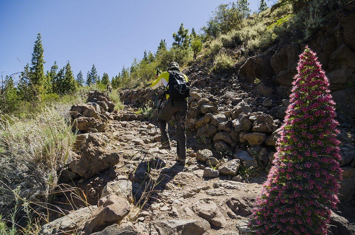 Tenerife Walking Festival hiken