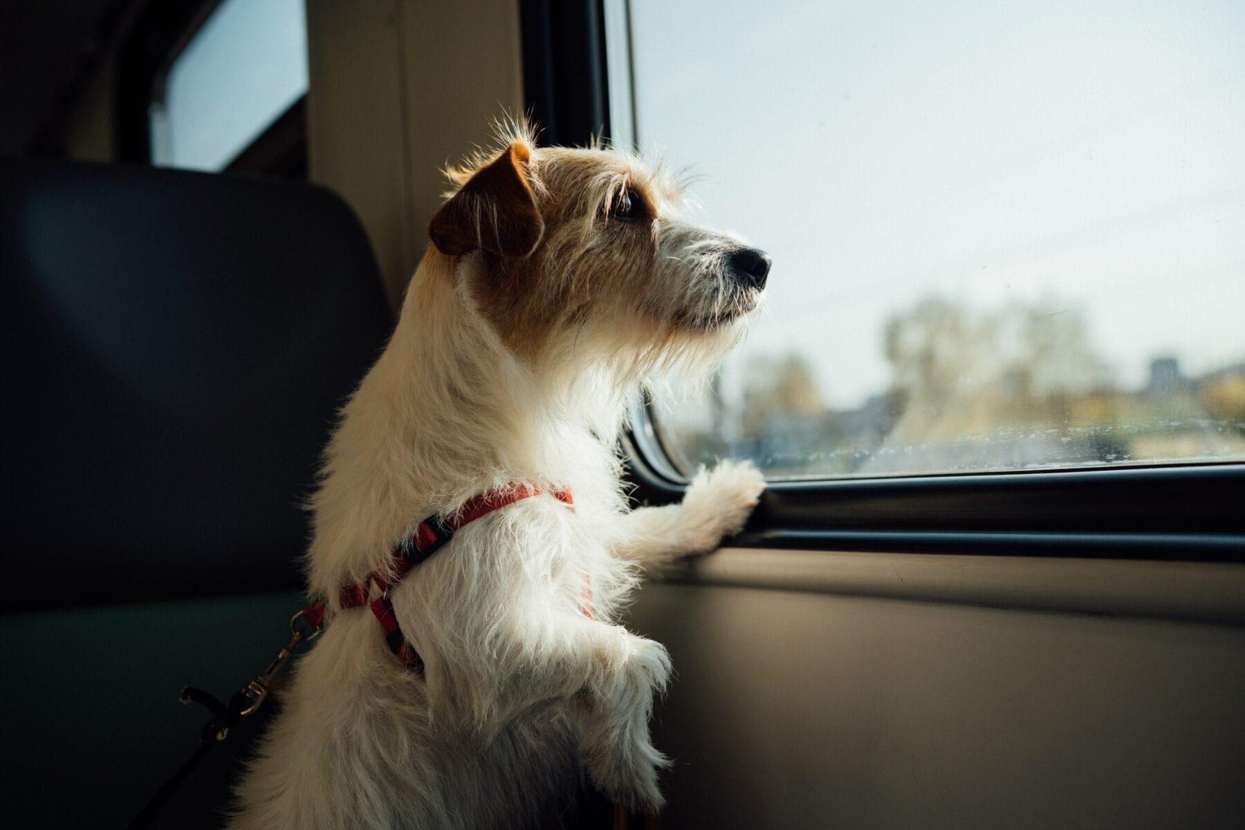 Hond mee op vakantie hond in trein