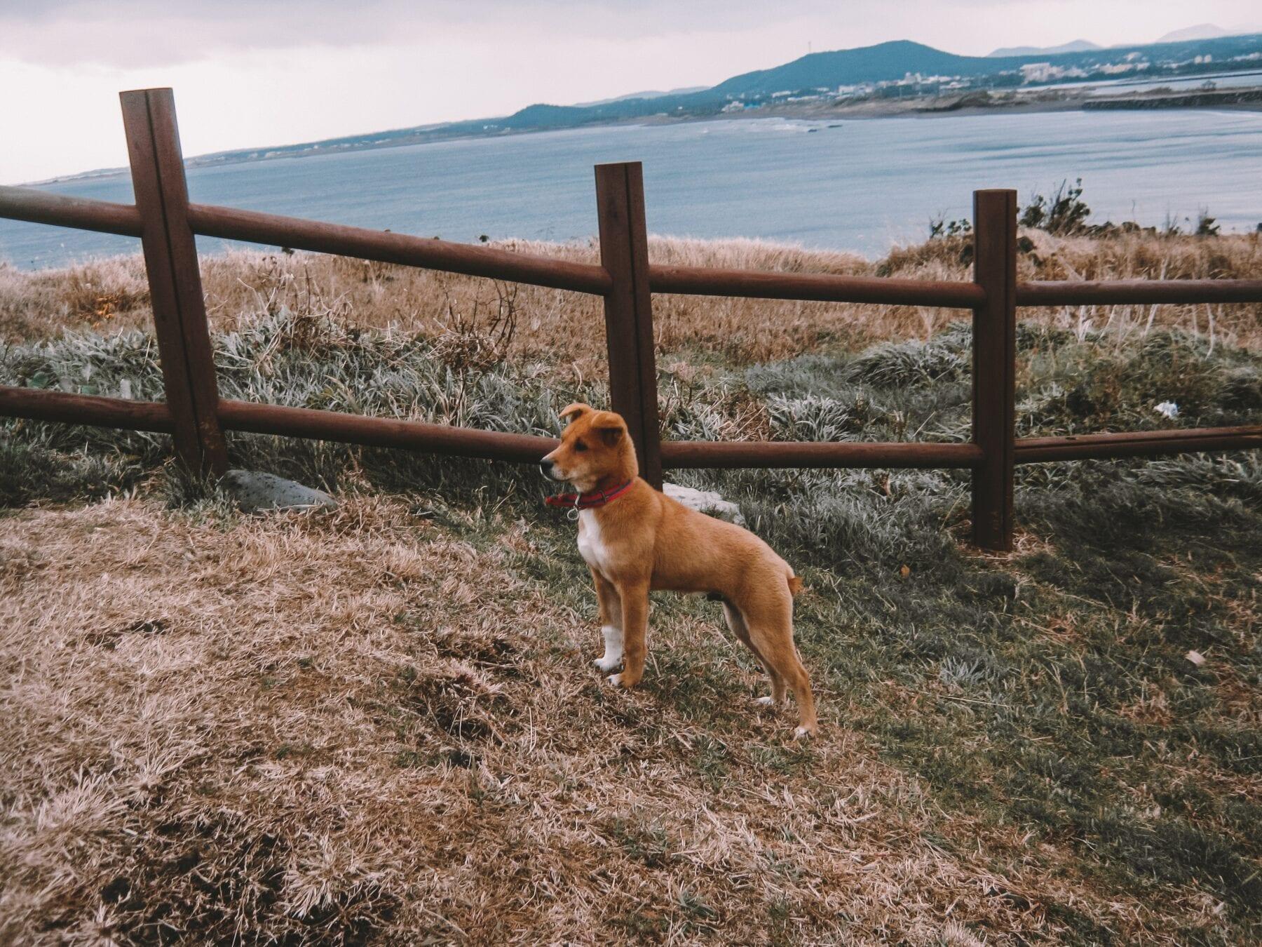 Hond mee op vakantie