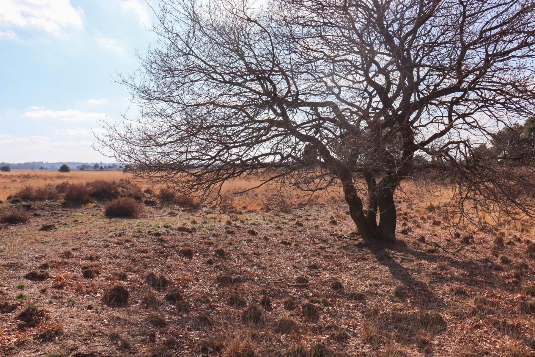 Natuurpoorten Strabrechtse Heide