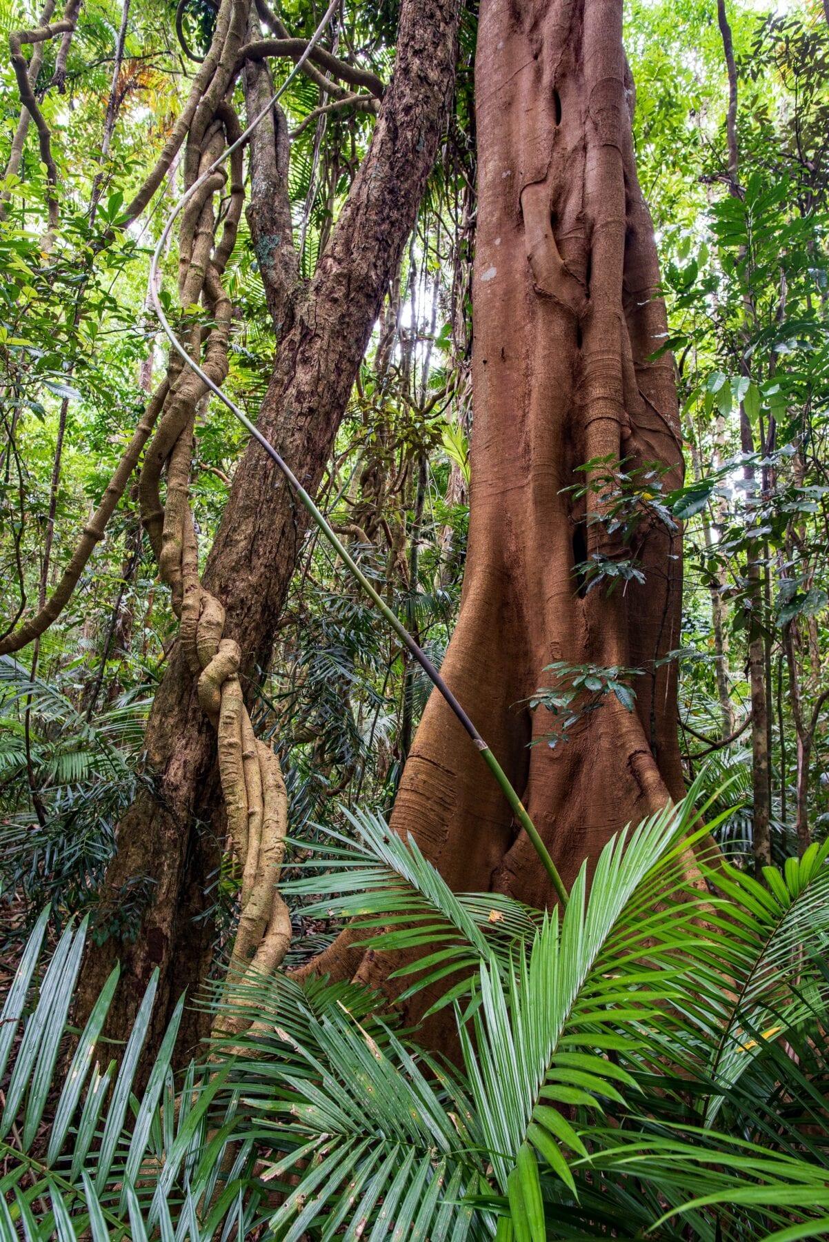 Ecosysteem regenwoud