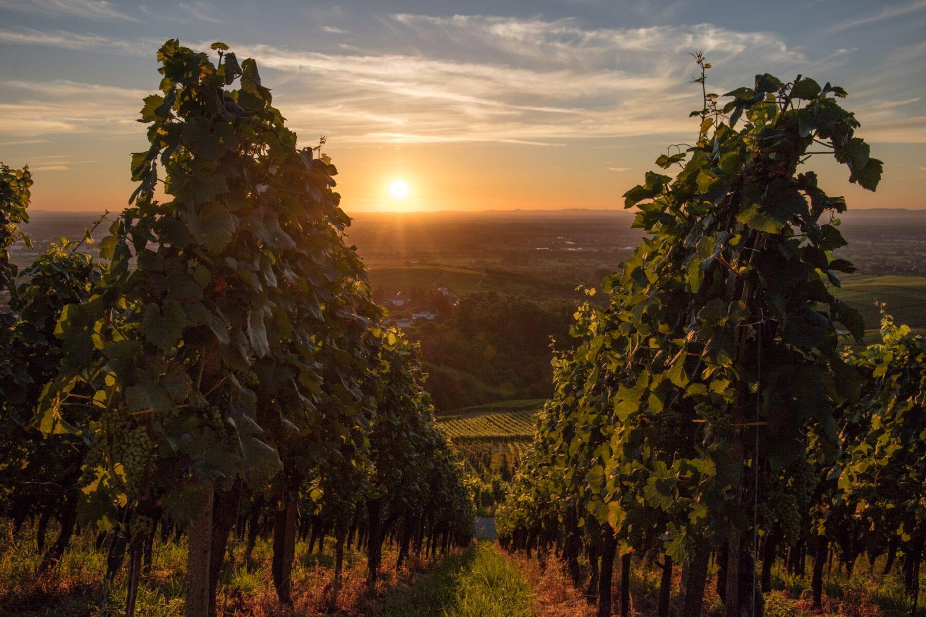 Baden-Württemberg wijn