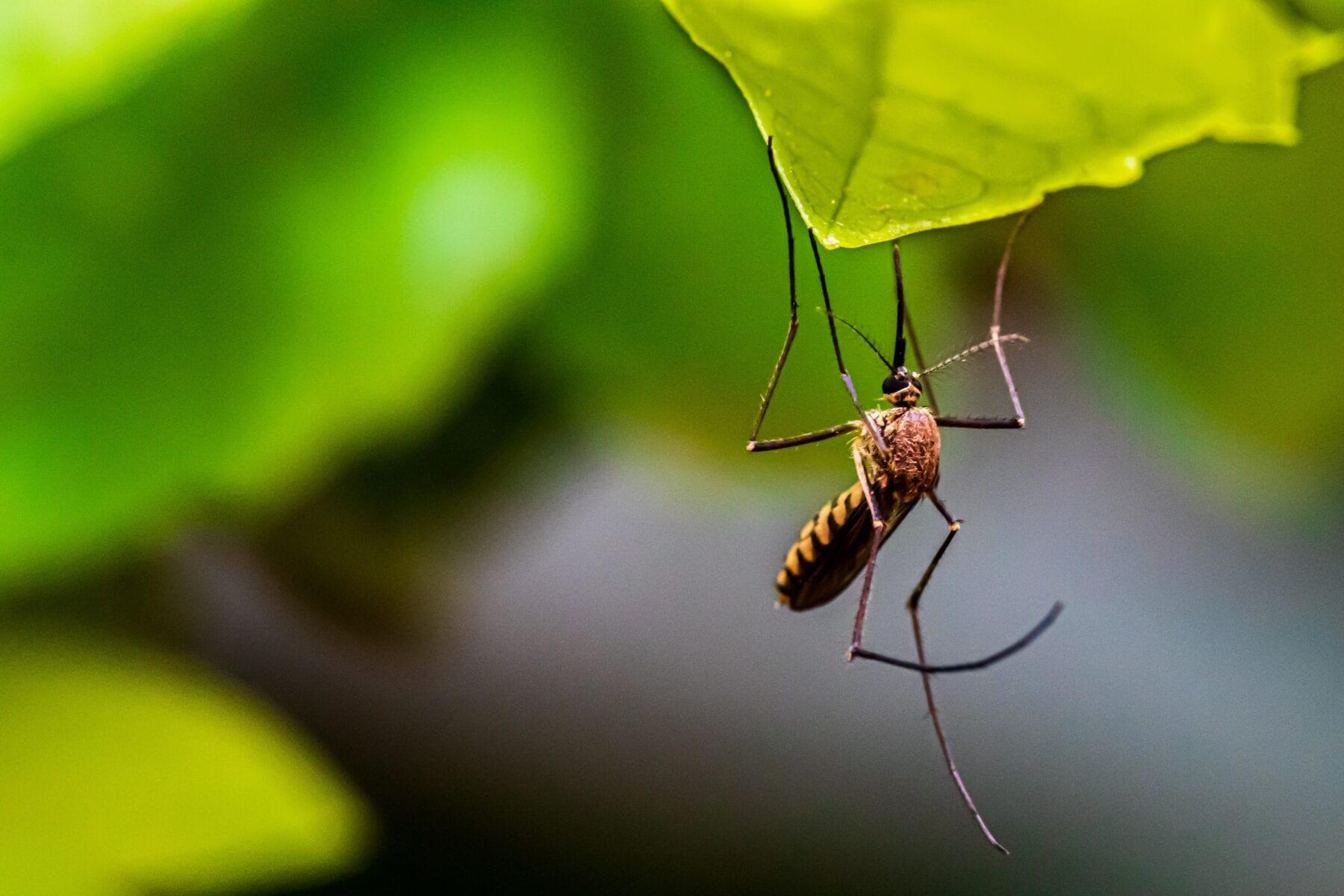 Waar komen muggen op af?